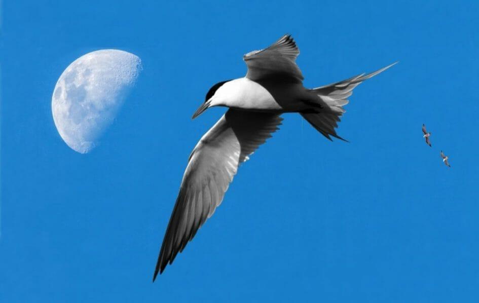 Pajaro y luna