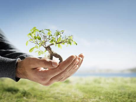 plantar arbre